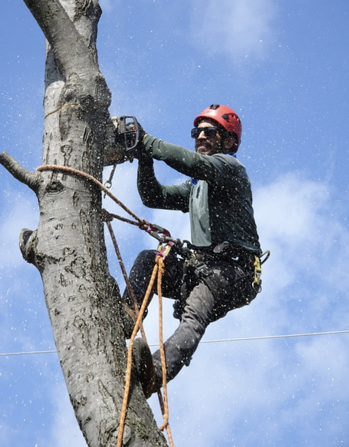 tree services in connecticut
