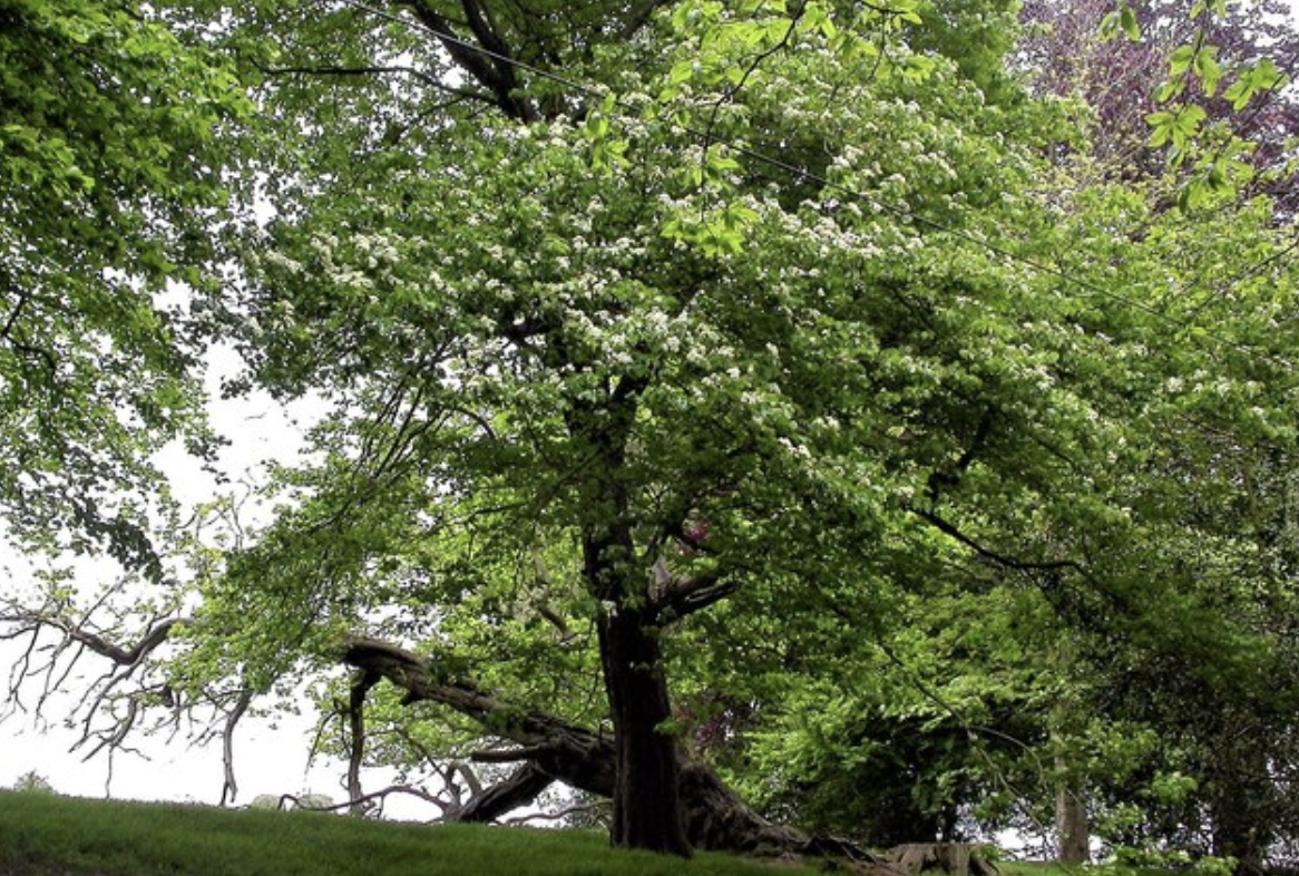 tree companies in connecticut